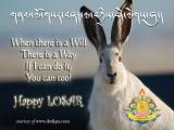 Not-so-iron rabbit :)